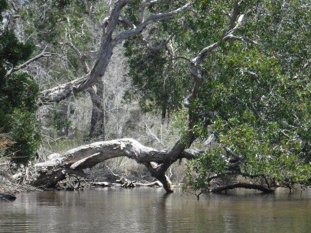Killick Creek